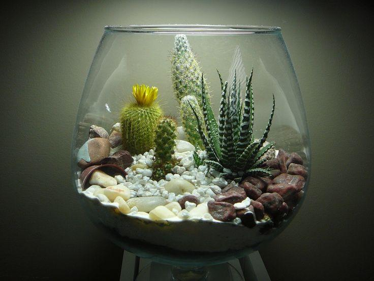 Picture of a terrarium garden